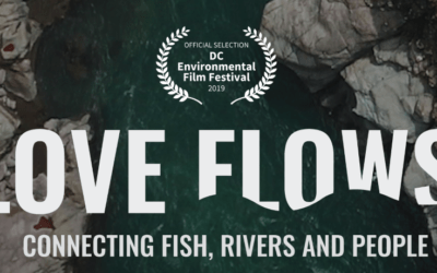 Diffusion live du documentaire « Love flows » sur les poissons migrateurs